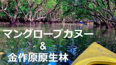 ワクワクの冒険感!奄美マングローブカヌー&金作原原生林ツアーに参加してみた